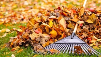 Yard Cleanup: Fall For Safety This Autumn